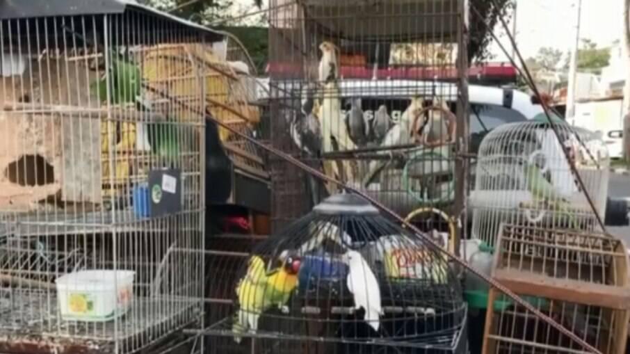 Dez pessoas são presas por maus tratos e comercialização de animais em Caxias