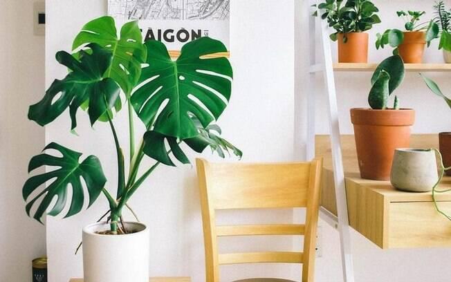 Descubra quais plantas ter dentro de casa e quais evitar