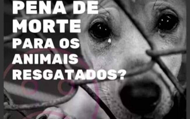 Petição criada pela protetora animal, Andréa Lambert, já possui mais de 150 mil assinaturas
