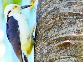 Fotos de várias espécies de aves foram incluídas em acervo de site