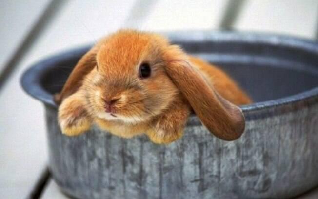 Os coelhos são animais naturalmente higiênicos, mas de vez em quando ficam sujos e fedidos