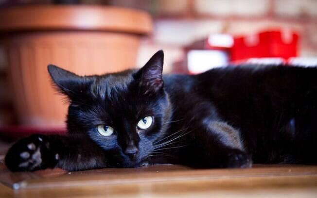 Adoção de gato preto aumenta nos EUA por causa do filme Pantera Negra
