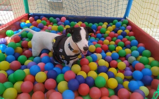cachorro dentro de piscina de bolinha