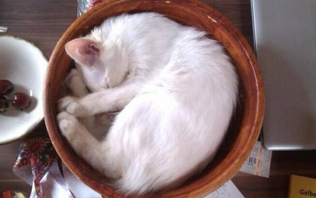 Um gato dormindo num cesto.