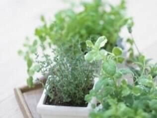 Hortinha caseira: uso de ervas para curar problemas simples de saúde é tão antigo quanto o cultivo doméstico