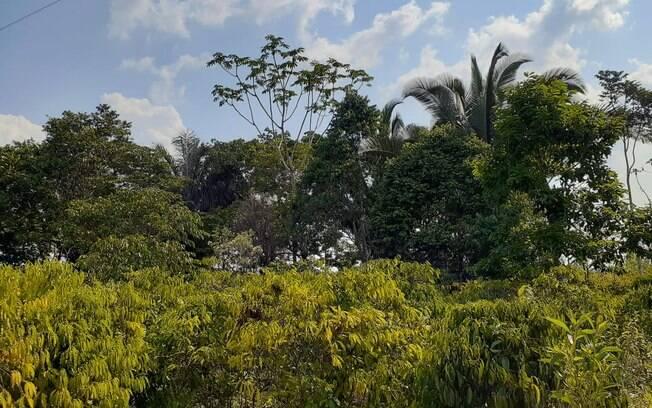 Propriedade do agricultor Ronaldo Carlos de Morais conserva árvores nativas