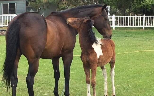 Cavalo resgatado torna-se 'pai' para um pequeno órfão