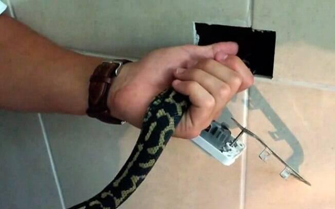 Cobra píton assustou morador ao aparecer dentro da parede do banheiro e causar curto-circuito