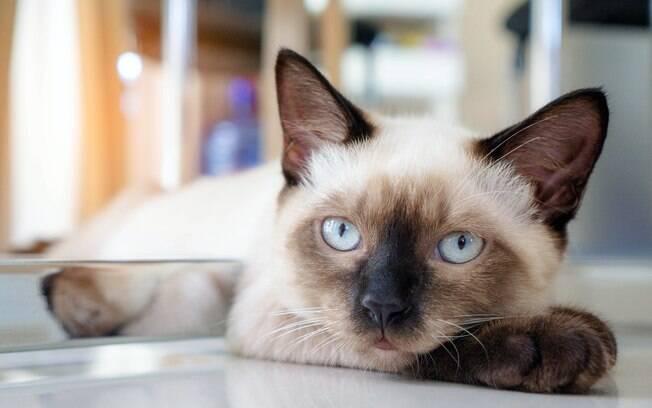A popularidade dos gatos só aumento no Brasil