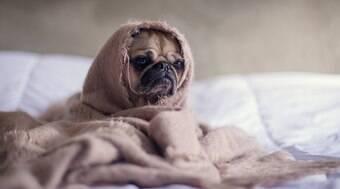 Veja 7 dicas para acalmar seu pet em situações estressantes