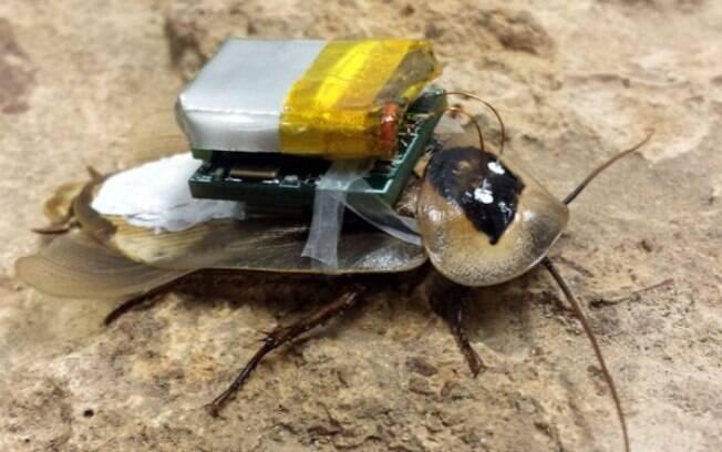 Criada por cientistas, a barata robótica pode obter informações de prédios desabados