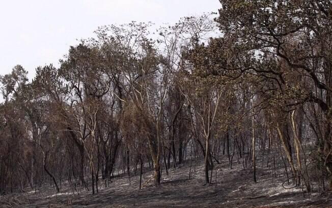 Ipê marca início do plano de recuperação de área queimada