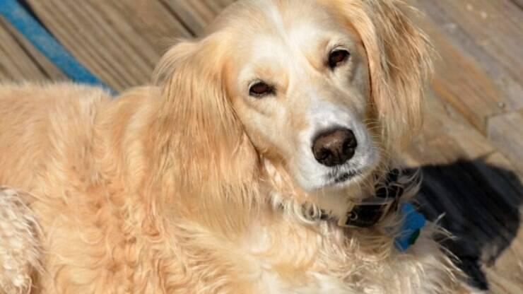 Cruzamento De Animais Saiba Como Funciona Com Cães E Gatos