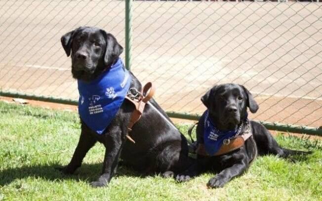 são homenageados no dia 24 de abril, quando é celebrado o Dia Internacional do Cão-Guia.