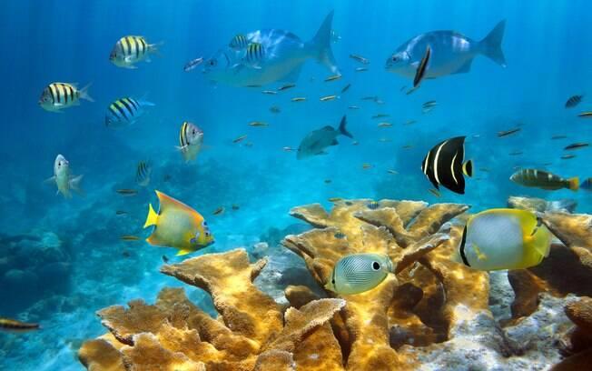 Os arrecifes de corais, pontilhados pelos peixes coloridos, são grandes atrações da ilha de San Andrés. Foto: shutterstock