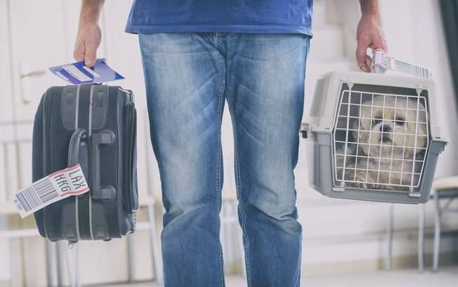 Companhia área United Airlines põe em vigor nova política que veta filhotes em suas aeronaves