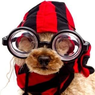Na nossa galeria de fotos da semana que vem, só fotos de Pets Fashion. O seu é estiloso? Mande já a foto dele