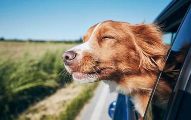A personalidade do cachorro de Touro