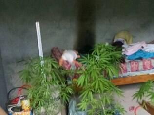 Plantas eram cultivadas dentro de casa, no centro da cidade