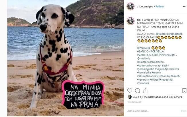Cães são liberados para passear nas areias das praias do Rio