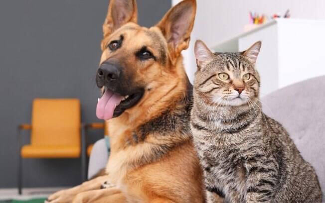 Raiva: saiba como prevenir a doença nos pets