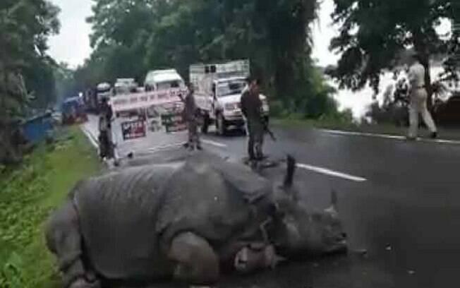 Imagem do vídeo compartilhado por Kaziranga National Park e Tiger Reserve no Twitter