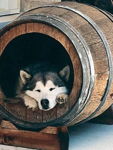 Inspire-se! Confira as melhores ideias de casinhas para cachorro