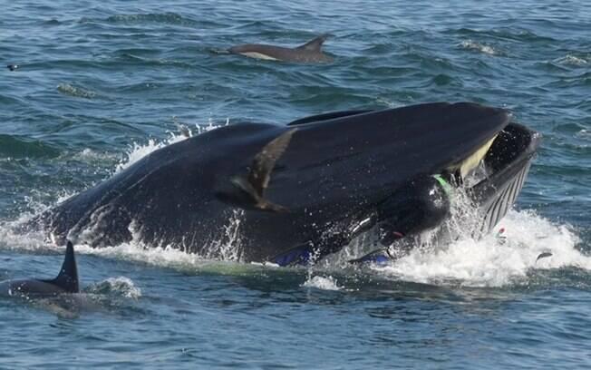 Homem foi cuspido por baleia