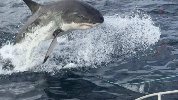 Assista um tubarão atacando um barco e mordendo seu motor – Último Segundo