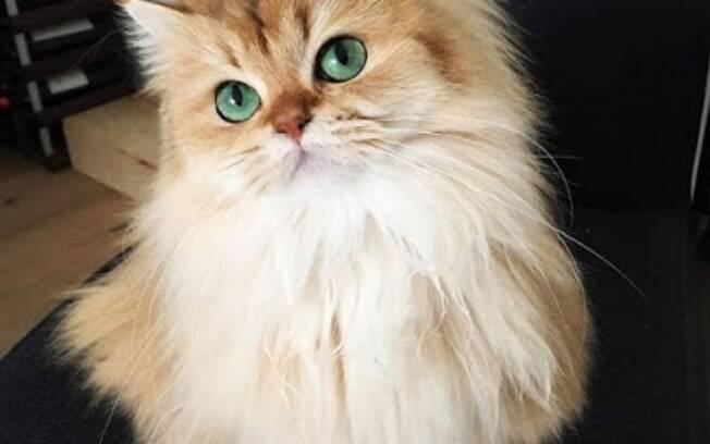 Essa é a gatinha mais fotogênica do mundo.