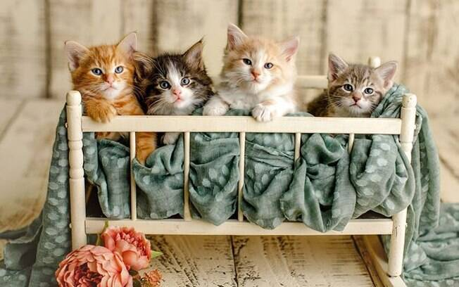 Gatinhos fotografados por Kacey