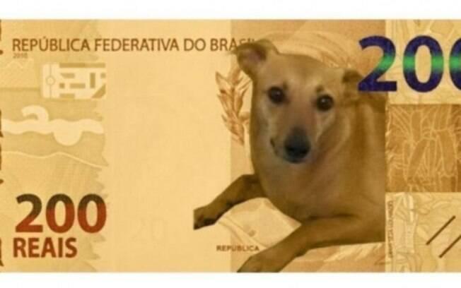 O meme do vira-lata caramelo como a nova nota de 200 reais