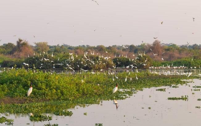 O que fazer em Bonito: o Pantanal é outro roteiro cheio de riquezas que pode ser explorado em três dias de viagem