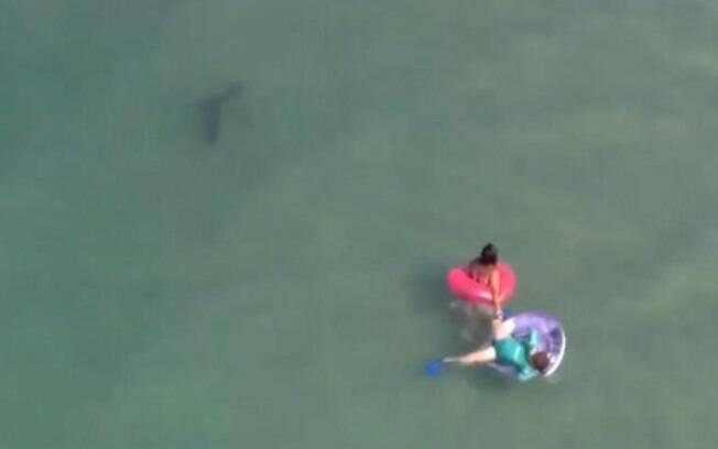 Câmeras flagraram tubarões no mar de Daytona Beach