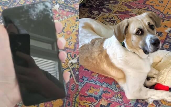 cachorro e celular