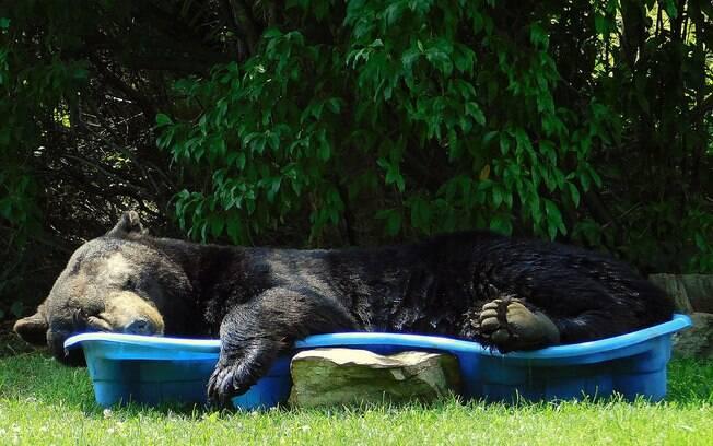Urso invade quintal e dorme em piscina infantil nos Estados Unidos.