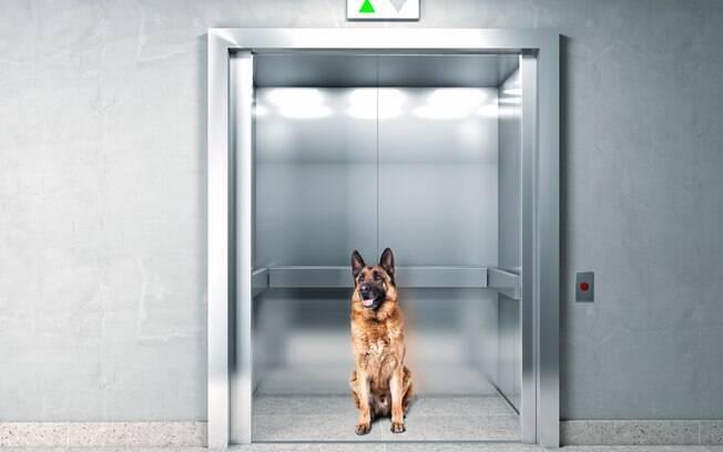 Animais em condomínio se tornou pauta frequente entre moradores, que precisaram chegar a um acordo benéfico para todos