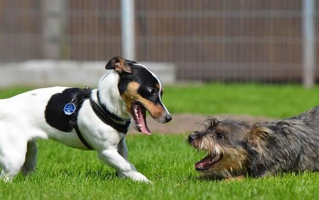 Animais que tem contato com outros animais ou com terra, por exemplo, estão mais propícios a contaminação por vermes e necessitam usar vermífugo
