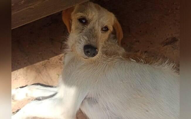 Polcia prende pastor que mantinha ONG com maus-tratos a animais
