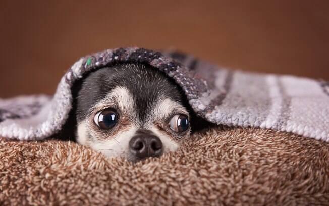 Os animais também precisam de cuidados especiais no frio
