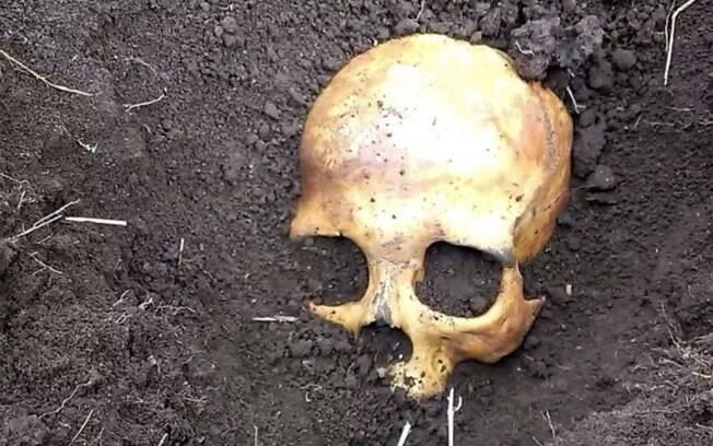 Idoso que não teve a identidade divulgada colhia batatas em seu sítio quando encontrou um crânio em meio à plantação