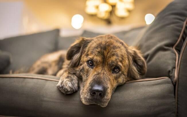 Além de ser um problema para os seres humanos, os animais de estimação também estão sujeitos a desenvolver a chamada de depressão canina