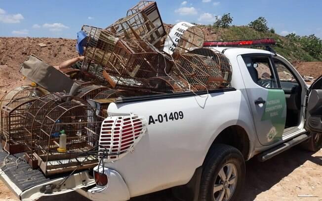 Gaiolas apreendidas e destruídas pela Polícia Militar Ambiental