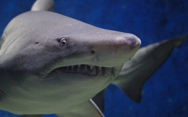 Tubarão amedrontador
