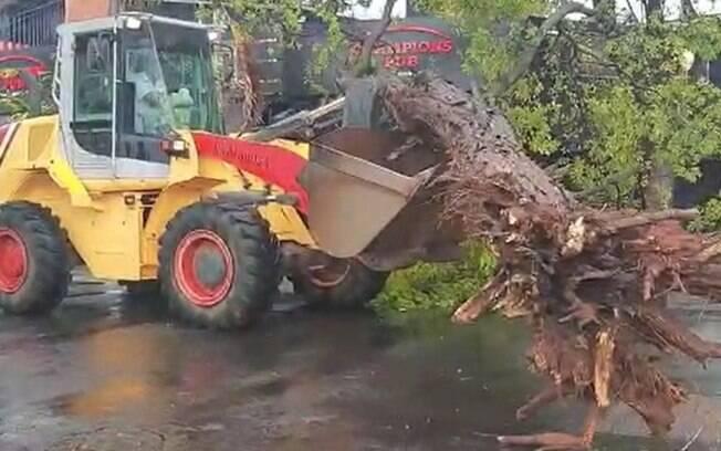 Chuva rápida em Campinas causa a queda de duas árvores