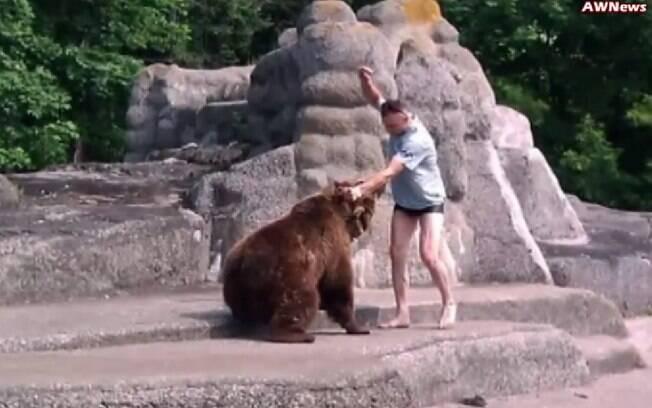 Homem aparentemente bateu na ursa fêmea após invadir seu espaço em zoo da Polônia