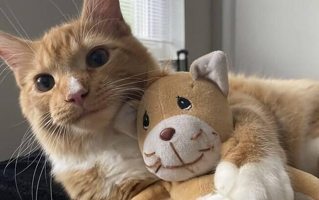 O gatinho que adora passar o dia abraçado no seu melhor amigo