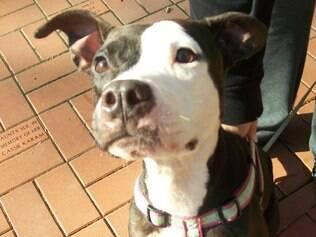 Cachorro pode ter passado até dois meses sem receber cuidados