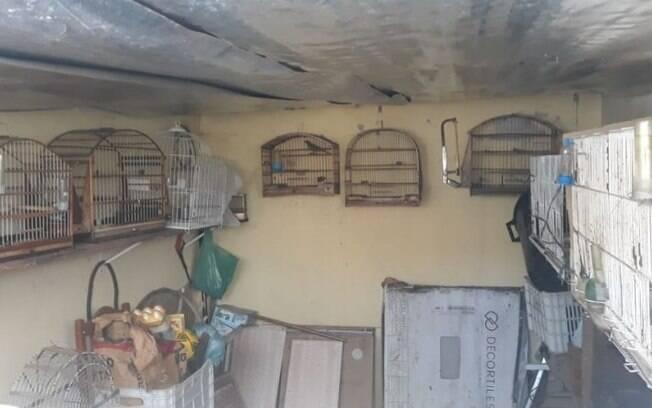Polícia resgata nove pássaros em cativeiro no Parque da Figueira