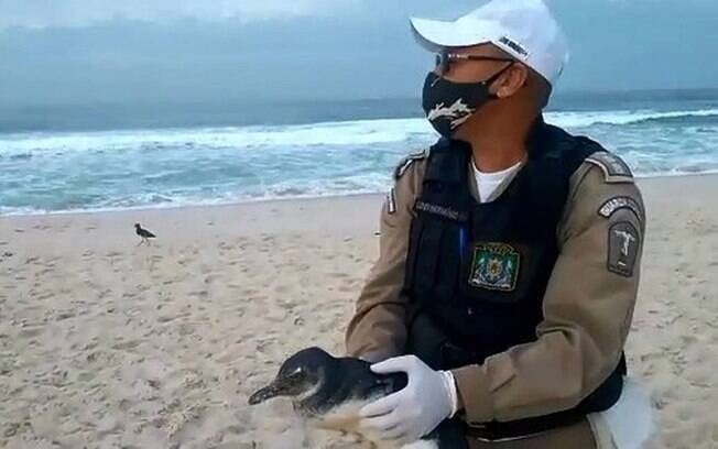 Agente da guarda municipal segura pinguim resgatado em praia no Rio de Janeiro